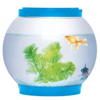 Glass Fish Bowl With Led Light - Blue