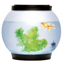 Glass Fish Bowl With Led Light - Black